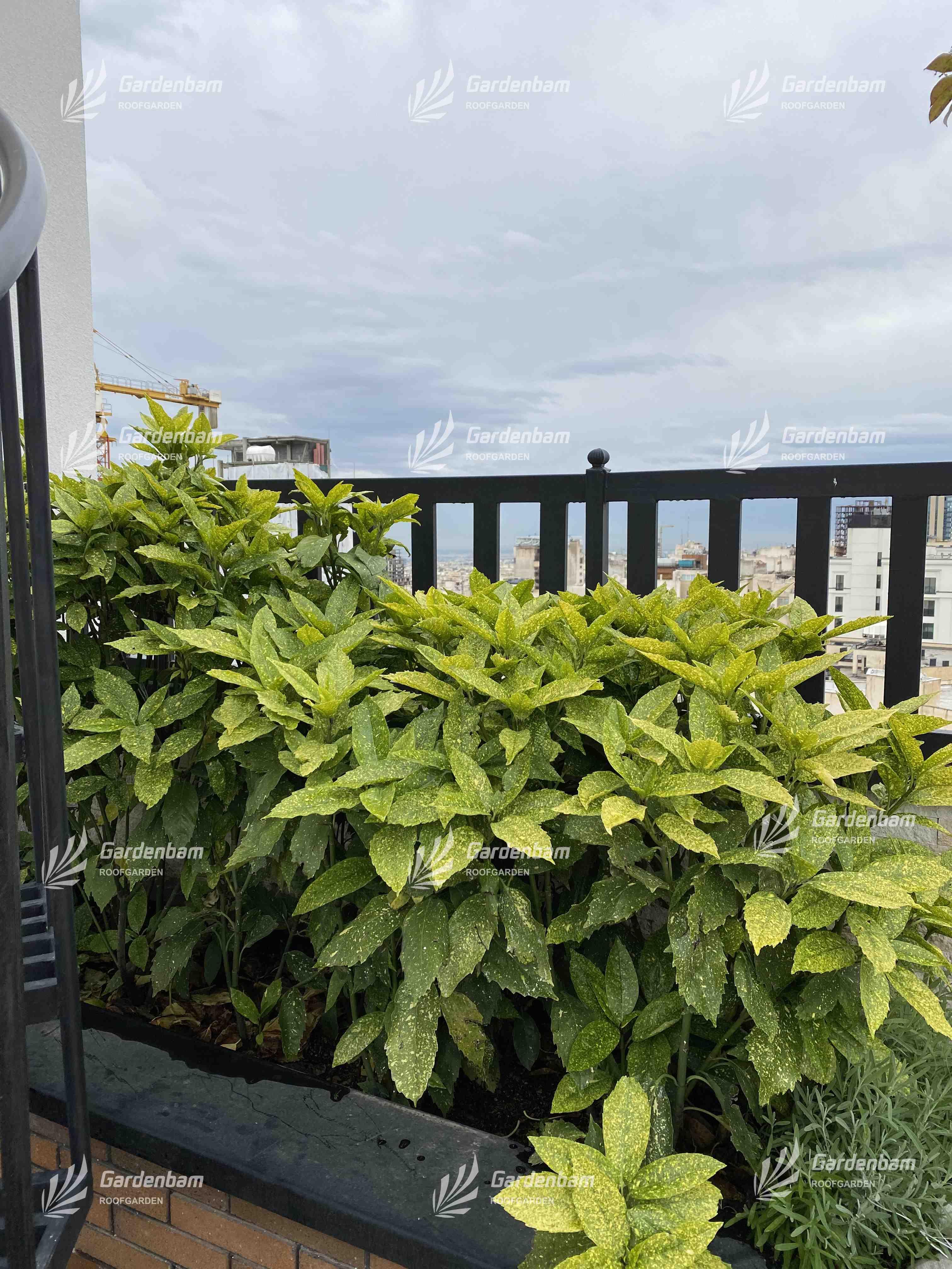 روف گاردن و گیاهان مناسب روف گاردن   آکوبا   پروژه بام سبز شرکت گاردن بام-سعادت اباد