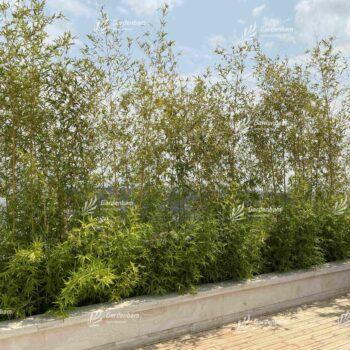 گیاه روف گاردن و خصوصیات آن | روف گاردن | گیاه |بامبو | نی خیزران | بام سبز شیبدار | طراحی و اجرای روف گاردن| بام سبز شرکت گاردن بام- پروژه سعادت آباد