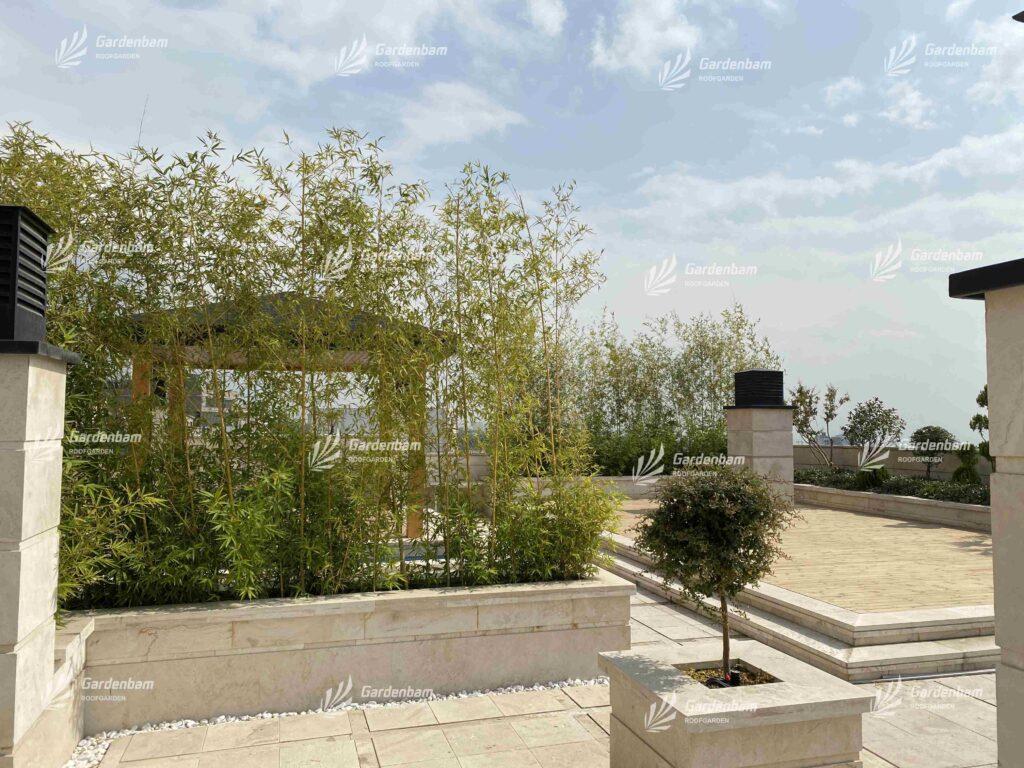 بامبو | نی خیزران | پوشش گیاهی | گیاه روف گاردن |پروژه بام سبز شرکت گاردن بام-سعادت اباد طراحی و اجرای روف گاردن| بام سبز شرکت گاردن بام- پروژه سعادت آباد