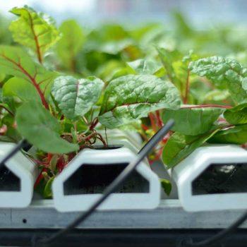 سیستم کشاورزی روی بام سبز