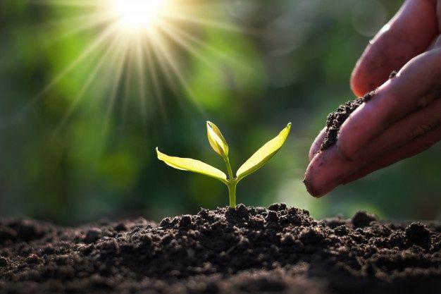 محیط زیست | تاثیر روف گاردن بر محیط زیست | گاردن بام | بام سبز | روف گاردن | روفگاردن | گرین روف | Roofgarden | greenroof | Gardenbam