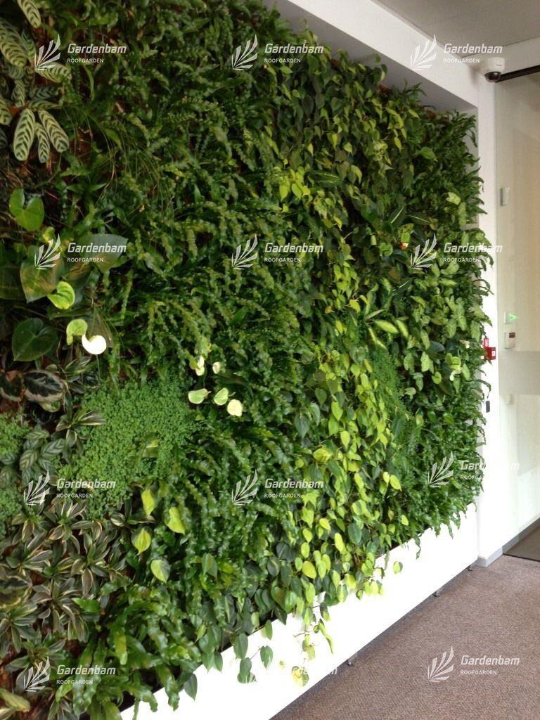 دیوارسبز   گرین وال   گاردن بام   مشاور و مجری دیوارسبز و بام سبز   محوطه سازی (لنداسکیپ)