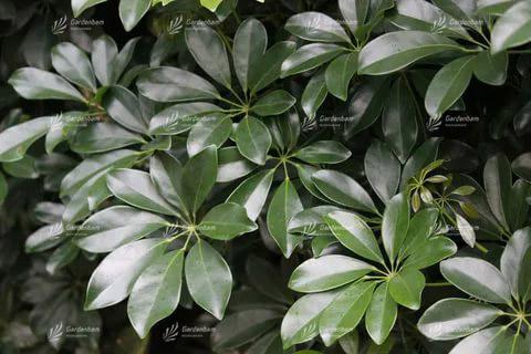 گیاهان مناسب برای ساخت دیوار سبز و روف گاردن طراحی و اجرای تخصصی روف گاردن و لنداسکیپ  پروژه دیوارسبز  مهندس پیمان جمشیدی گاردن بام گرین وال