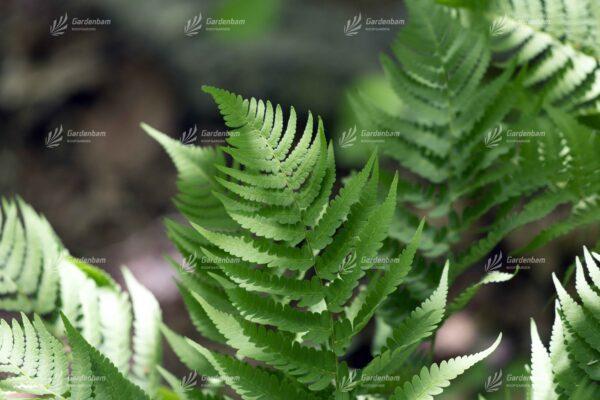 گیاهان مناسب برای ساخت دیوارسبز و روف گاردن| گیاه مخصوص دیوار سبز و محوطه سازی | طراحی و اجرای تخصصی روف گاردن و لنداسکیپ| پروژه دیوارسبز| مهندس پیمان جمشیدی|گاردن بام|گرین وال