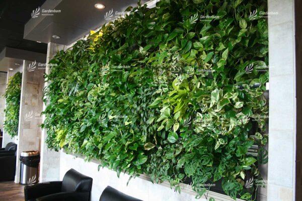 نمونه دیوار سبز   مجری دیوار سبز  شرکت گاردن بام ساخت دیوار سبز  تاریخچه پیدایش دیوار سبز